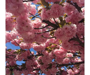 april, pink, and spring image