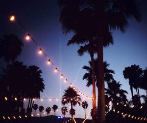 lights, night, and palms image
