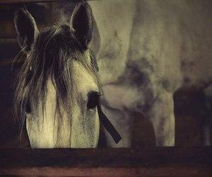 horse, photo, and sad image