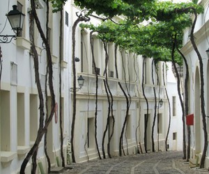 tree, street, and spain image