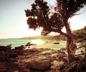 beach, sea, and tree image