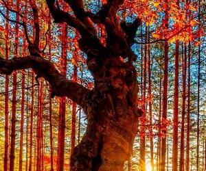atardecer, hintergrund, and orange image
