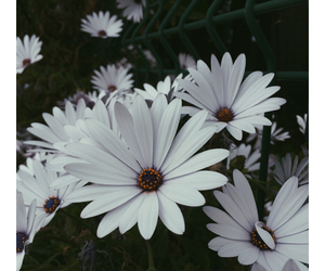 black, cold, and flower image