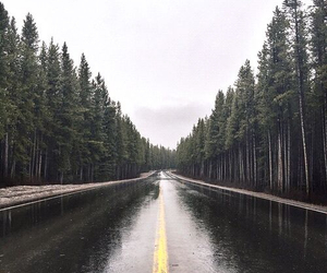 forest, road, and rain image