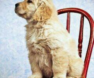 animals, golden, and cute image