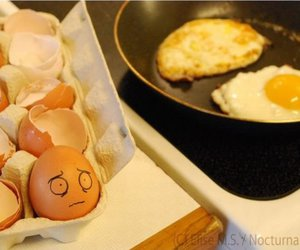 eggs and egg image