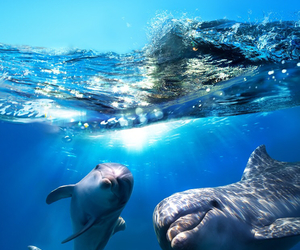 dolphin, animal, and sea image