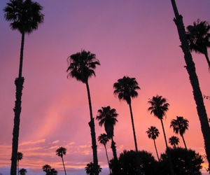 pink, palm trees, and sky image