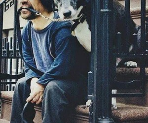 peter dinklage, dog, and game of thrones image