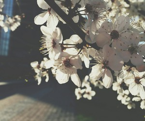 tumblr, 2015, and flowers image