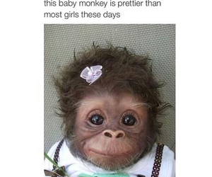 lol, funny, and monkey image