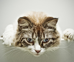 cat, funny, and gato image