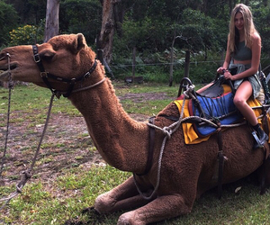 camel, happy, and model image