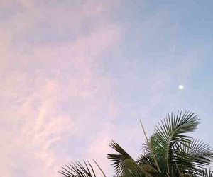 sky, palm, and moon image