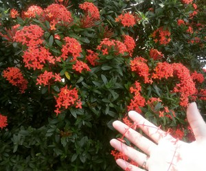 creative, red, and flowers image