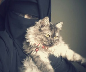cat and niqab image