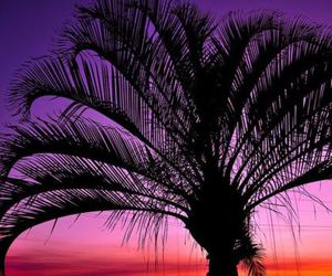 palm tree, sunset, and purple image