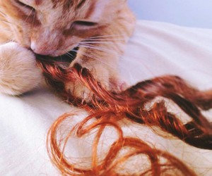 cute, cat, and hair image