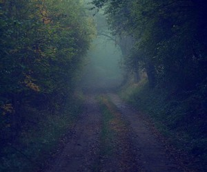 foggy, forest, and misty image