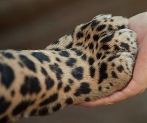 animal, tiger, and hand image