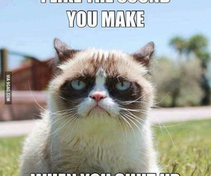 funny, cat, and shut up image