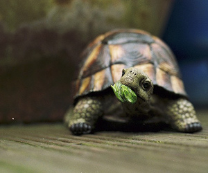 cute, turtle, and animal image