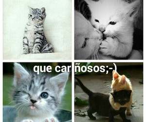 animal, love, and cariñosos image