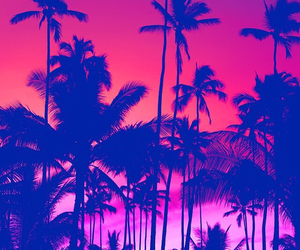 palms, pink, and tree image