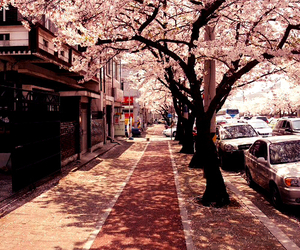 japan, tree, and pink image
