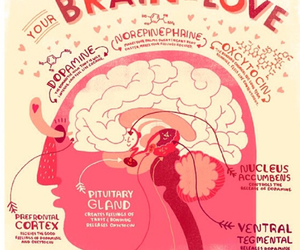 brain and love image