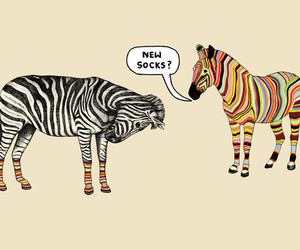 zebra, socks, and funny image