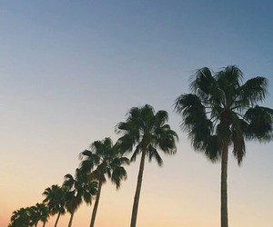 sky, palm trees, and nature image