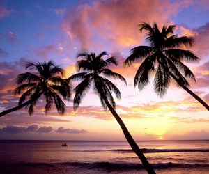 beach, sunset, and palm trees image