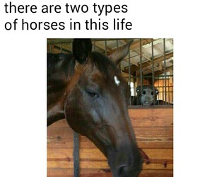 funny, horses, and life image