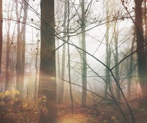 frio, naturaleza, and otoño image