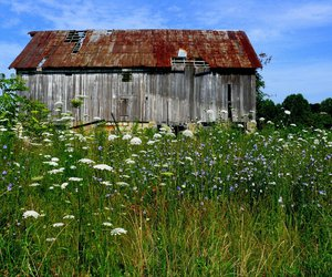 barn, field, and grass image