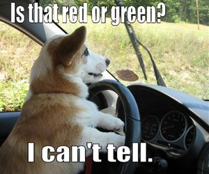 cars, dogs, and funny image