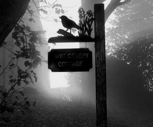 photography, bird, and black and white image