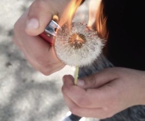 fire, lighter, and friends image