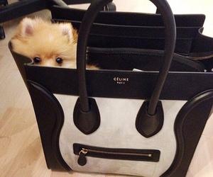 celine, bag, and dog image