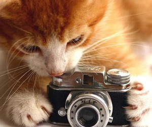 cat, camera, and animal image