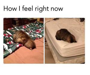 cat, funny, and sleepy image