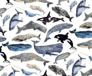 whale, animal, and wallpaper image