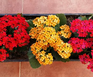 bright, colours, and flower image