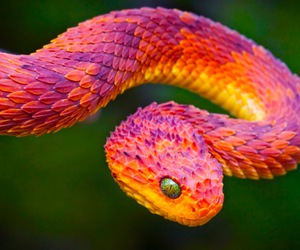 snake, animal, and colorful image