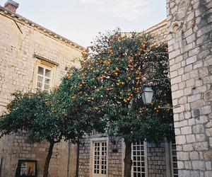vintage, tree, and orange image