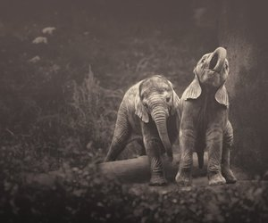 elephant, sweet, and cute image