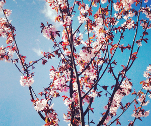 blossom, summer, and blue sky image