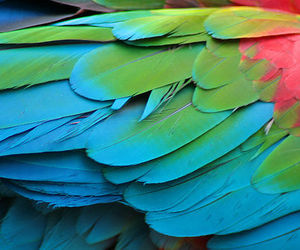 feather, parrot, and bird image