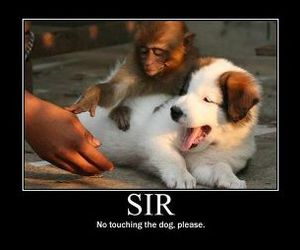 dog, monkey, and funny image